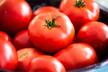 ultomatoes.com Domain For Sale